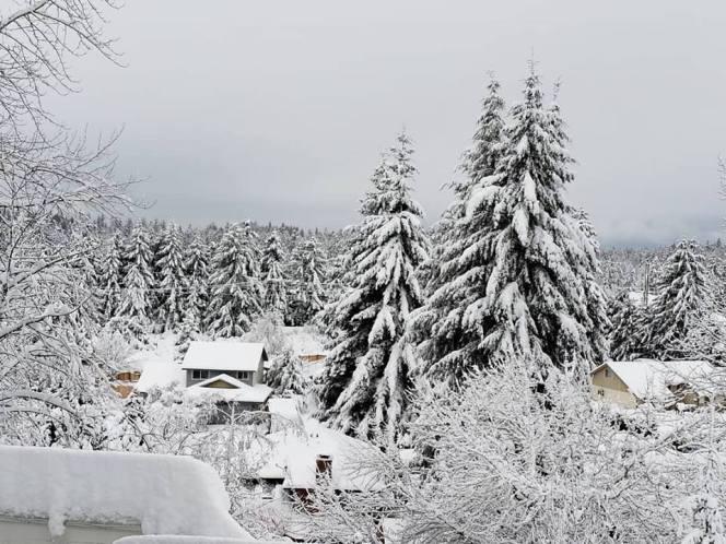 snow2019.jpg